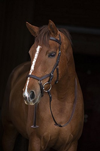 RAMBO Micklem Competition Bridle - Havana: Extra Full 1