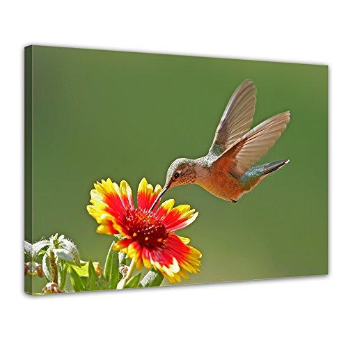 Kunstdruck - Kolibri - Bild auf Leinwand - 80x60 cm einteilig - Leinwandbilder - Tierwelten - Vogel - Kolibri im Schwirrflug