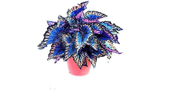 Fesjoy Tapisserie de Coton Fine 100/% Fait /à la Main en macram/é Tenture Murale Art D/écoration Boho Chic Boh/ème Home Deco