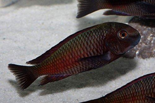 TM Aquatix Aquarium Sand White Fish Tank Substrate Natural Silica 0,5-0,8mm / 5kg 6