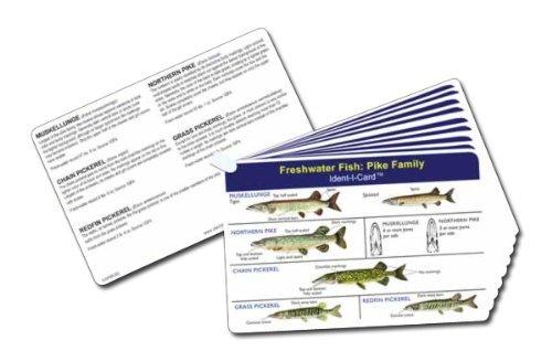 34429b1ea8469 Fish Ident-I-Cards - Set of 9 Freshwater Fish Identification Cards