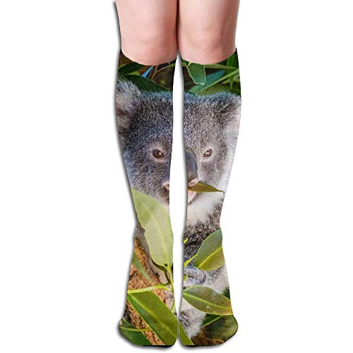 Kola Is On The Branch Women's Fashion Knee High Socks Casual Socks
