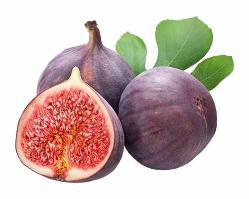feige violetta Blumen Senf Feige 'Brown Turkey' - Ficus Carica 'Brown Turkey' 30-50 cm - Mittelfrühe Sorte