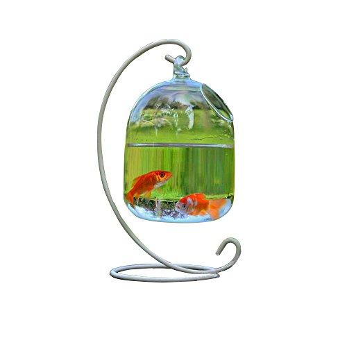 Hanging Glass Fish Bowl carro armato della