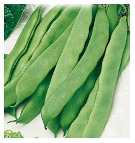 inception pro infinite 350 c.ca semi fagiolo nano verde mangiatutto romano - phaseolus vulgaris in confezione originale prodotto in italia - fagioli nani verdi