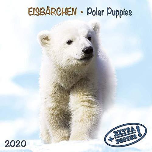 Polar Bears/Eisbärchen 2020: Kalender 2020 (Artwork Edition)