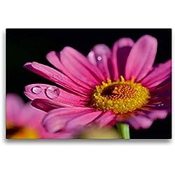 Calvendo Margarita de Color Rosa, 75x50 cm