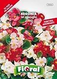 Sementi da fiore di qualità in bustina per uso amatoriale (BEGONIA IN MISCUGLIO)