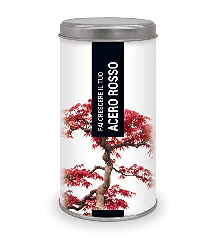 Garden Pocket -Frai Crecere il tuo ACERO ROSSO - Bonsai kit