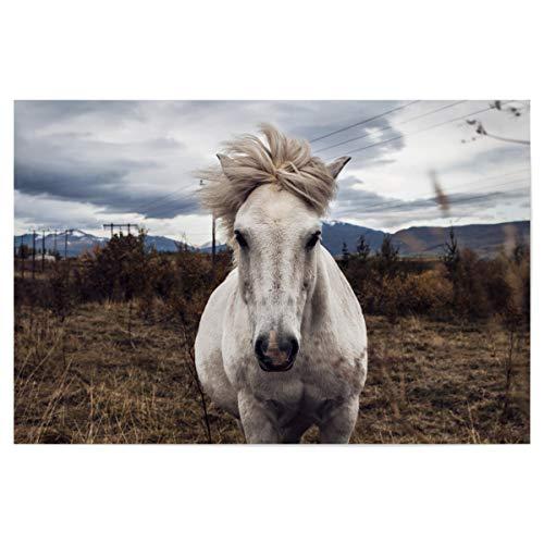 artboxONE Poster 90x60 cm Pferde Natur Wildes Pferd hochwertiger Design Kunstdruck - Bild Pferd Pony Tier
