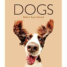Dogs (Focus on Midi 2)