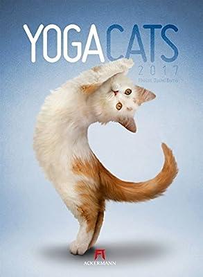 Yoga Cats 2017