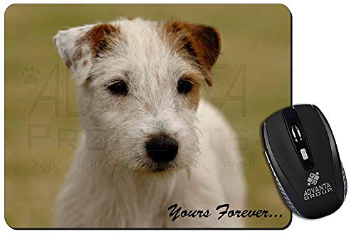 Parson Russell Terrier \