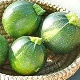 Zucchini Tondo chiaro di Nizza - Kürbis - 5 Samen