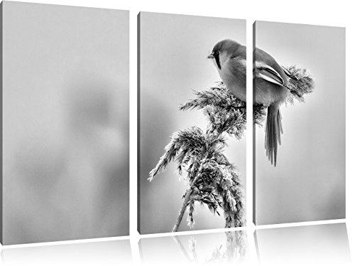 Monocrome, kleiner Vogel auf Weizen im Winter 3-Teiler Leinwandbild 120x80 Bild auf Leinwand, XXL riesige Bilder fertig gerahmt mit Keilrahmen, Kunstdruck auf Wandbild mit Rahmen, gänstiger als Gemälde oder Ölbild, kein Poster oder Plakat