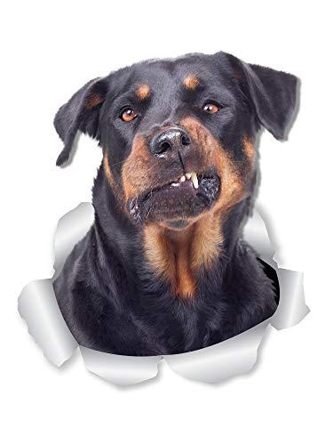 Winston & Bear Divertente Rottweiler Dog Decalcomanie da Parete - Confezione da 2 - Rottie 3D Decalcomanie per pareti, Auto, WC e Altro - Regalo Rottweiler