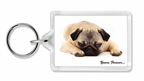 Mops-Hund ' Yours Forever' Sentiment Foto Schlüsselbund TierstrumpffüllerGeschen