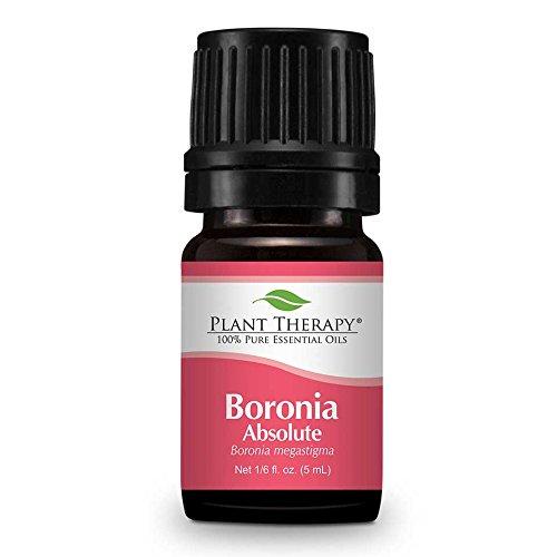 boronia-assoluta-olio-essenziale-5-ml-100-puro-di-grado-terapeutico