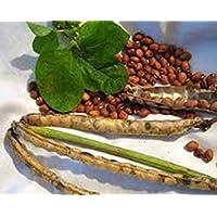 PlenTree Semilla de guisante, Mississippi Plata, herencia, orgánico, no gmo
