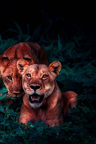 Lions Notebook