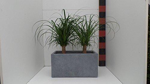 'Seau à 57 cm de largeur : Jardinière rectangulaire bac à fleurs Pot ECO Composite \\