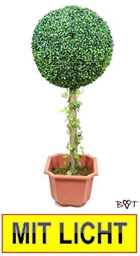 Buchsbaum 10 cm