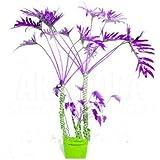 Nuevas semillas 100 PC mezcladas Philodendron Semillas color perfecto plantas de interior contra la radiación Absorber Semillas polvo jardín del árbol Bonsai 6