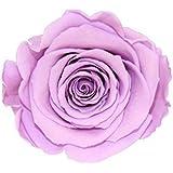 ETERNAL ROSES XL Rosenkopf, konserviert, Farbe Lavender