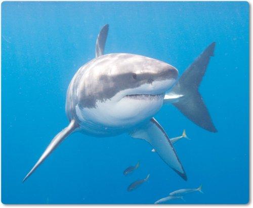 aus Textil mit Rückseite aus Kautschuk rutschfest für alle Maustypen Motiv: Weißer Hai schwimmend unter Wasser [02] (Schwimmende Hai)