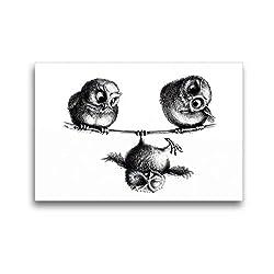 Premium Textil-Leinwand 45 x 30 cm Quer-Format Drei Eulen Freiheit und Spaß | Wandbild, HD-Bild auf Keilrahmen, Fertigbild auf hochwertigem Vlies, Leinwanddruck von Stefan Kahlhammer