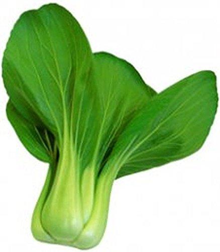 Shoopy Star 50 - Samen: San Fan Hybrid Pak Choi Seeds - Dicke dunkelgrüne Blätter - Schmecken GREAT !!! -