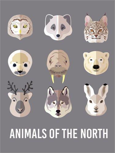 Unbekannt Forex-Platte 60 x 80 cm: Tier des Nordens (englisch) von Kidz Collection/Editors Choice