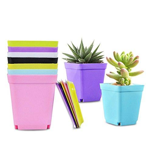 mentopf aus Kunststoff, 12Blumentöpfe mit 12Untertassen für Home Office Schreibtisch Garten Flower Shop, Set von 12 ()