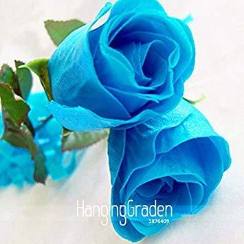 Vente! 50 Pièces / Sac, New Rosen Samen Blue Rose Seeds Gothic Gardenin, # MD7QBL