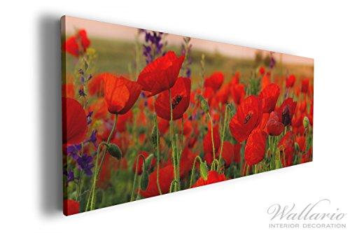 Wallario XXL Wallario Leinwandbild Mohnblumen auf dem Feld - 60 x 150 cm in Premium-Qualität:...