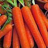 SANHOC Samen-Paket:, Nantes, Erbschaft, OrganicSeeds, Tastyfor Snacks -