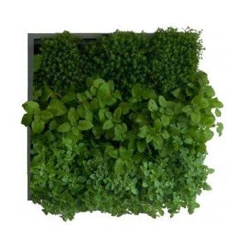 Bac à Plantes Mur Végétal Intérieur 'Karoo' - D&M