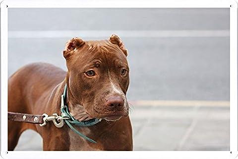 Plaque affiche de métal Affiche de American Pitbull Muzzle Leash Dog Collar 64854 20*30cm
