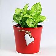 Paudhe Se Yaari Hanging Heart Planter Pot for Small Plants Succulents Cactus. Red Ceramic Porcelain Bone China
