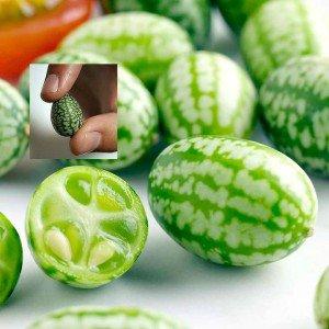 Mini-Melone 5 Samen -Melothria scabra, Mexikanische Mini-Gurke (Cucamelon) (Wassermelonen-gurken Samen)