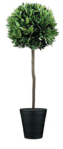 GreenBrokers Künstlicher Lorbeerbaum (150/152cm)-Premium Qualität natürliches Aussehen