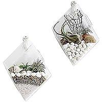 BUZIFU Terrario Cristal Colgante Transparente, 2 Piezas Jarrón de Vidrio con 2 Ganchos de Pared, Contenedor Hidropónico de Flor Planta, Ideal para Decoración del Hogar Oficina Jardín Fiesta Boda