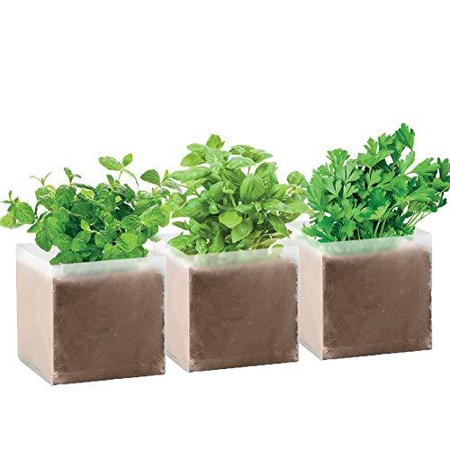 3er Pflanz Set Kräuter Samen Küchenkräuter Pflanzen Minze, Petersilie, Basilikum von notrash2003 Küchenkräuter