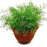 VISTARIC 4: Mini Onion Seed Heirloom Nicht-GVO-Gemüse-Samen Seltene Bonsai Pflanze DIY Hausgarten Haushalt Küche Würzen von Speisen 50 PC 4