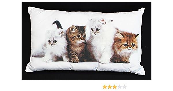 Brandsseller Coussin d/écoratif Motif Animaux 40 x 40 cm 40 x 40 cm Chat