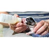 4LEGS Plastic Pet Small Dog Puppy Cat Kitten Milk Nursing Care Feeding Bottle Set