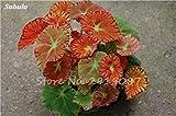VISTARIC 11: Happy Farm Mini Cipolla dolce seme verdure biologiche Seed pianta interessante giardino domestico di DIY Bonsai Vasi di fiori Fioriere 100 Pz 11
