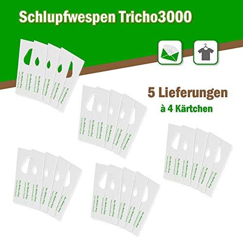 Kleider-/ Textilmotten 5 Lieferungen á 12.000 Stück auf 4 Kärtchen ()