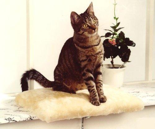 Silvio Design Katzenliege, Katzen-Kuschelbett, Fensterliege für Katzen, in beige, Maße: ca. 37 x 28 cm