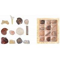 Fallen Fruits Fósiles Collection en caja de regalo